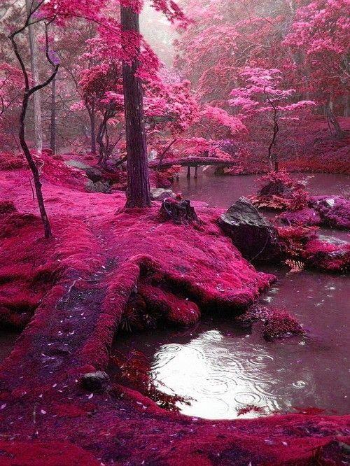 Jardin de Saiho Ji – Japon