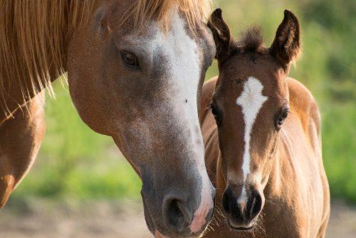 Amoureux des chevaux, venez passer un séjour équestre en Maine-et-Loire