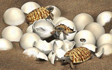 Des chercheurs trouvent un embryon dans l'œuf de tortue préhistorique